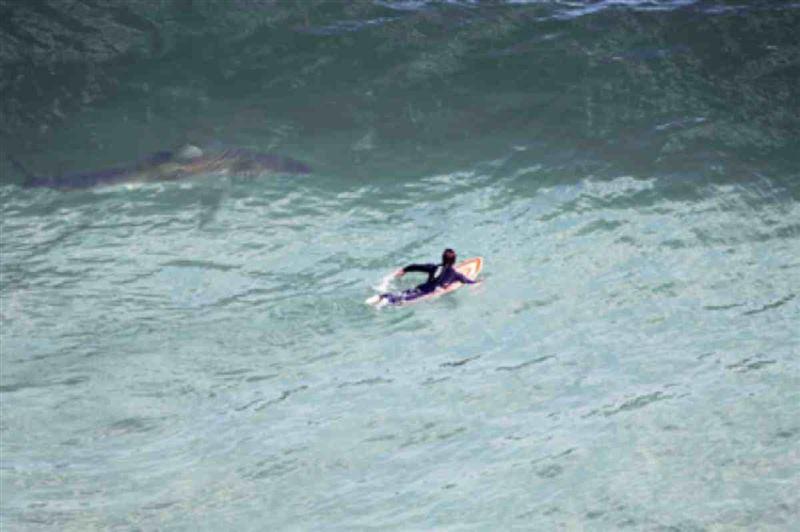 Ер адам жоғарыдан акуланы байқап, серферді құтқарып қалды