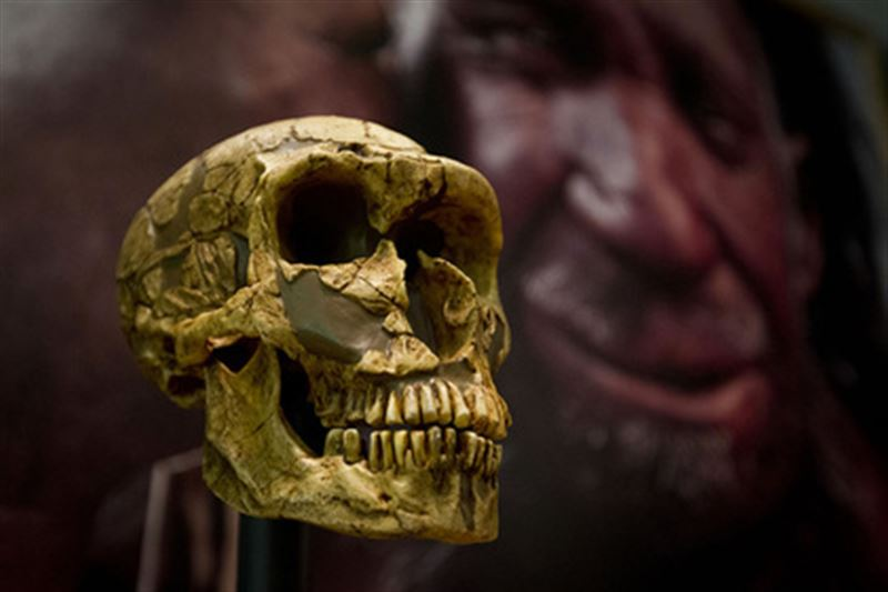 Ученые раскрыли причину вымирания неандертальцев