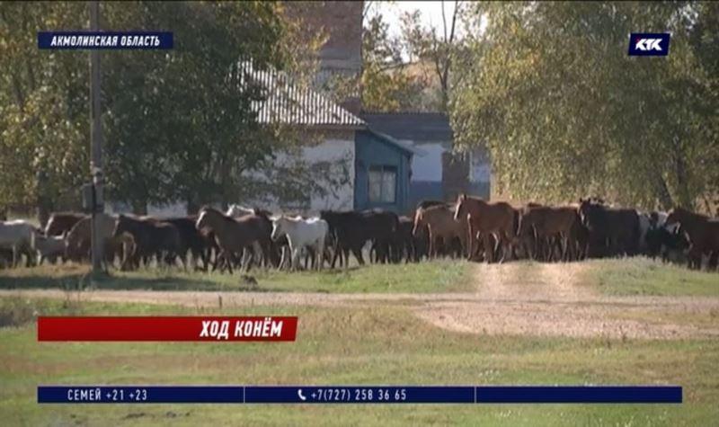 600 лошадей растоптали урожай в Акмолинской области