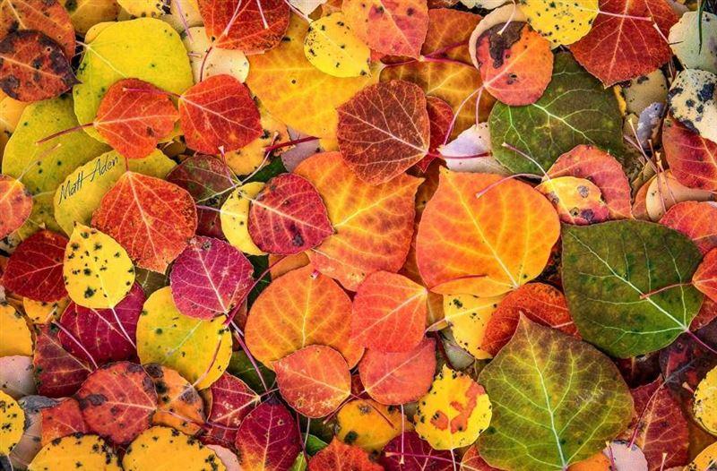 Какая погода будет в Казахстане в субботу, 5 октября