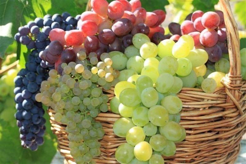 Стало известно, чем полезен виноград