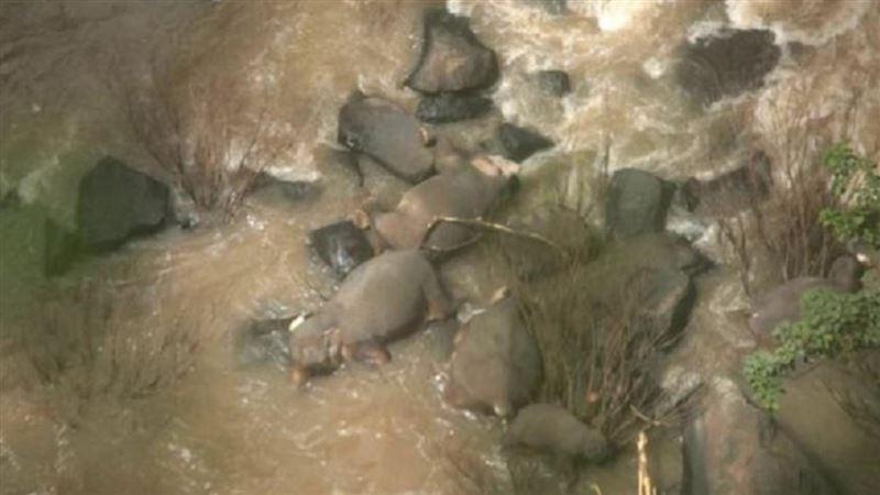 Пять слонов погибли, когда пытались спасти слоненка