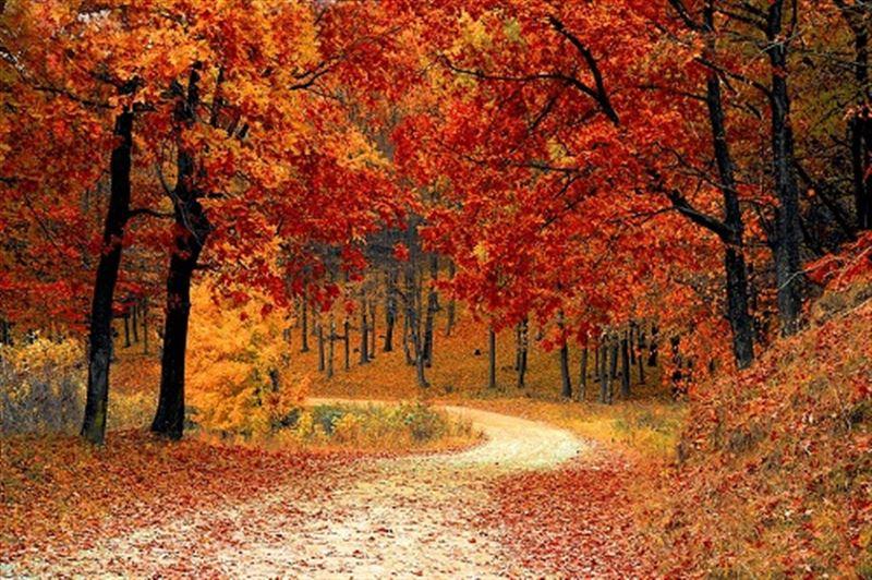 Какая погода ждет казахстанцев в четверг, 10 октября