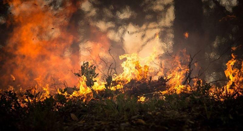 В Катон-Карагайском природной парке вспыхнул пожар