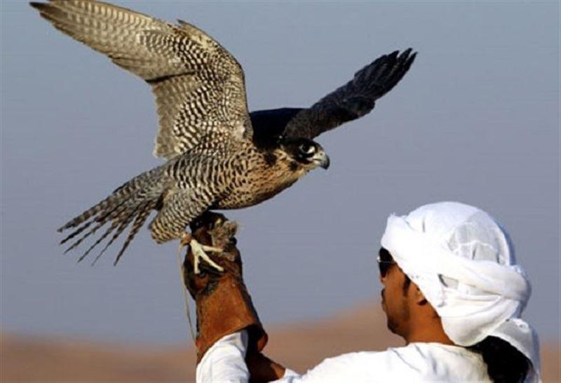 Араб шейхтары Қазақстанныңаң-құстарын аулайды