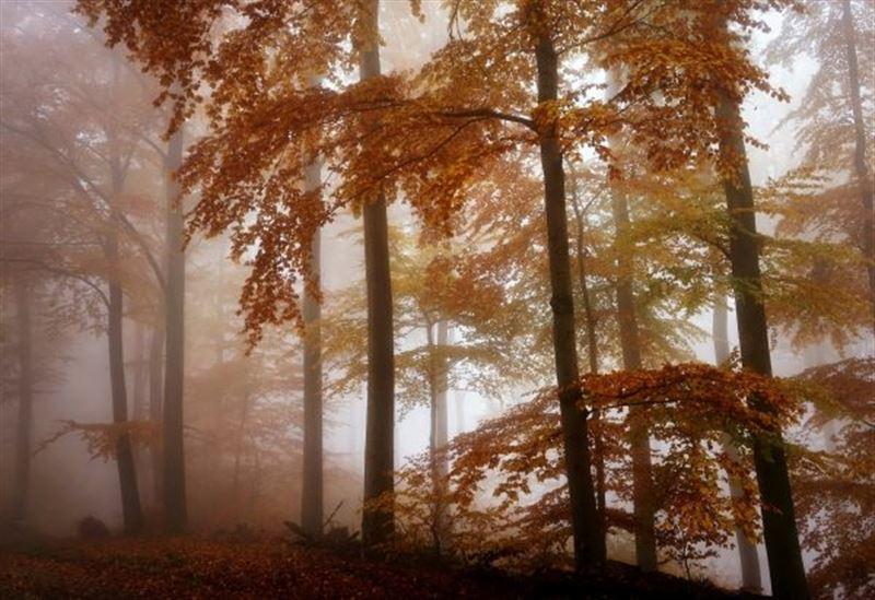 Какая погода будет в стране в понедельник, 14 октября