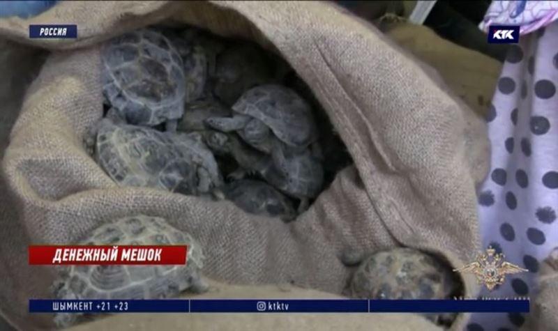 В оренбургском гараже нашли 4000 казахстанских черепах