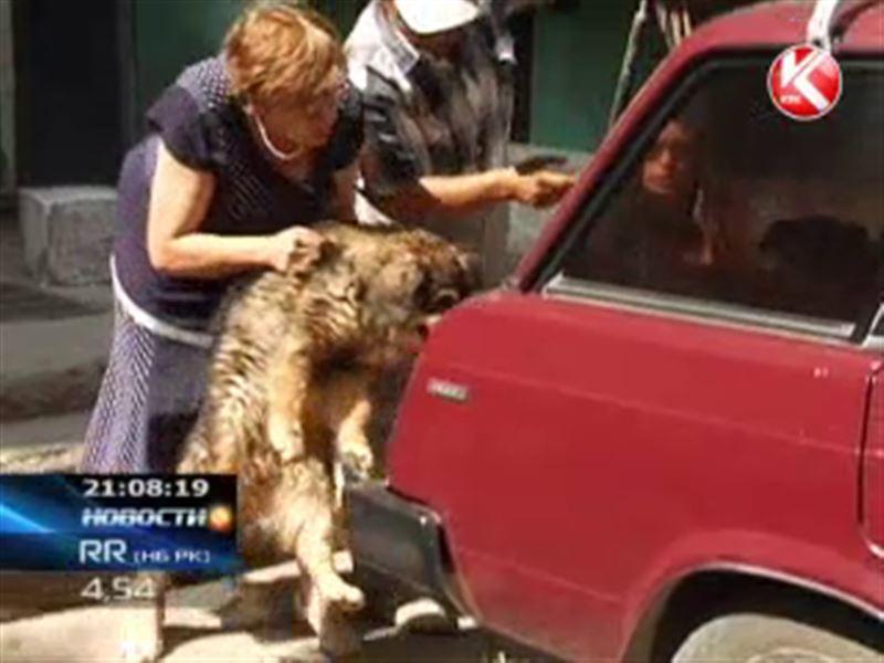 В Актобе 20 собак стали причиной судебного разбирательства