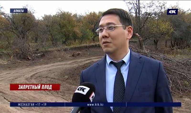 Земли с яблоневых садов близ Алматы воры вывезли на 70 миллионов – экологи