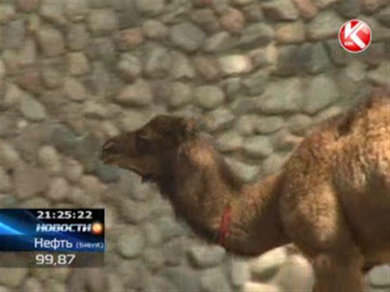 Алматинский зоопарк пополнился почти сотней малышей