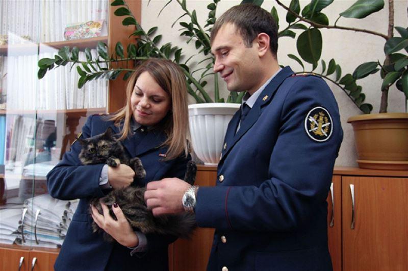 Гашиш нашли в ошейнике кошки в колонии Татарстана