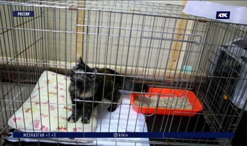 Задержан кот, «поставлявший» в колонию наркотики