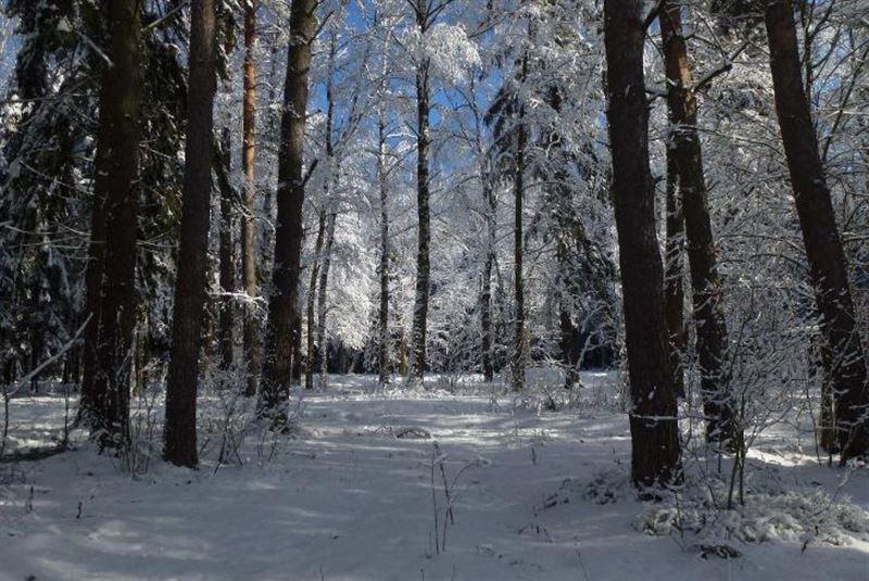 Парень и девушка совершили суицид в лесу на севере страны