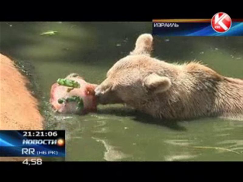 В израильском зоопарке животных кормят льдом