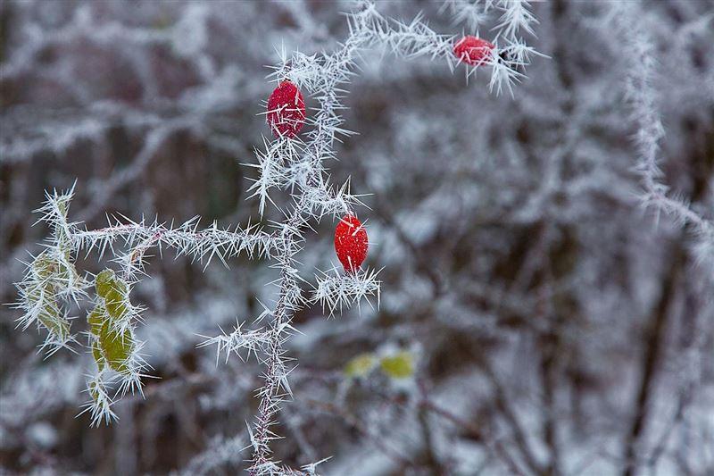 Снег и туман прогнозируют в некоторых районах Казахстана 16 ноября
