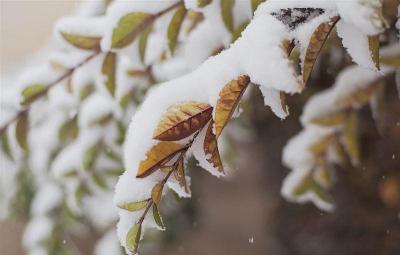 Снег и гололед прогнозируют в Казахстане 19 ноября