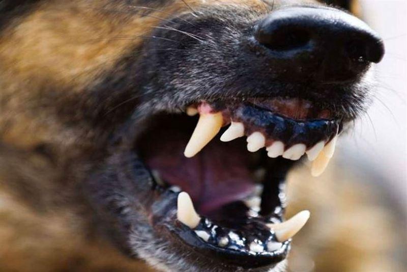 Паразит поселился в глазу мужчины после укуса собаки