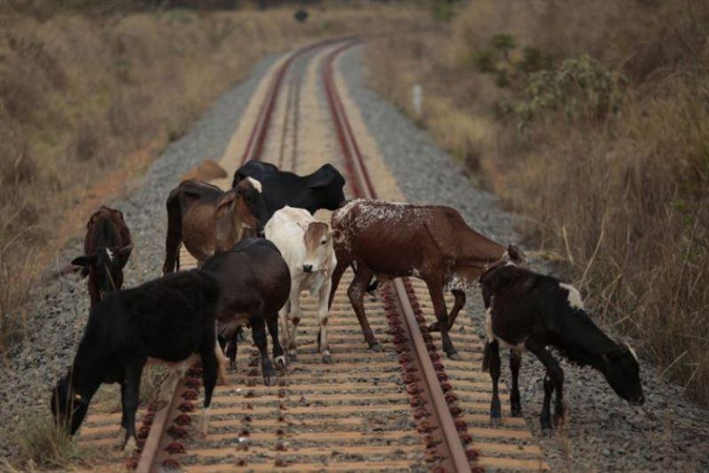 Поезд совершил наезд на корову в Алматинской области