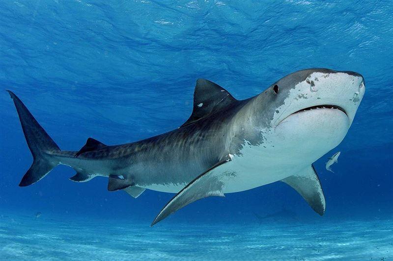 После нападения акулы житель Израиля стал соблюдать правила безопасности