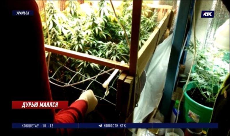 Уральский агроном-любитель выращивал в подвалах домов коноплю
