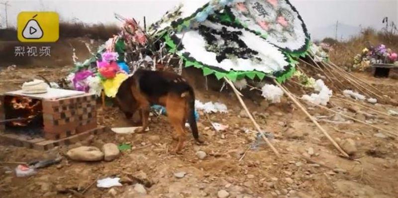 Верный пес пытался раскопать могилу хозяина в Китае