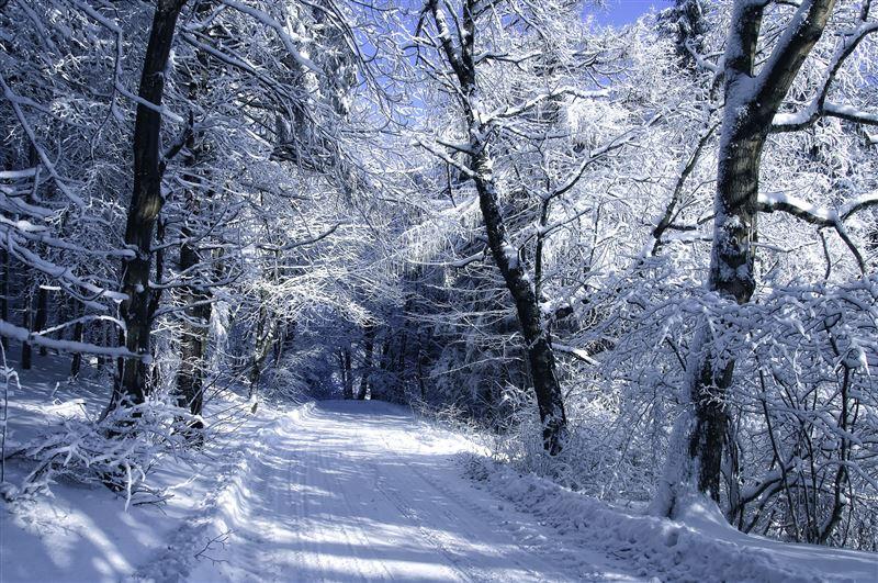 Снег прогнозируют в Казахстане в пятницу, 6 декабря