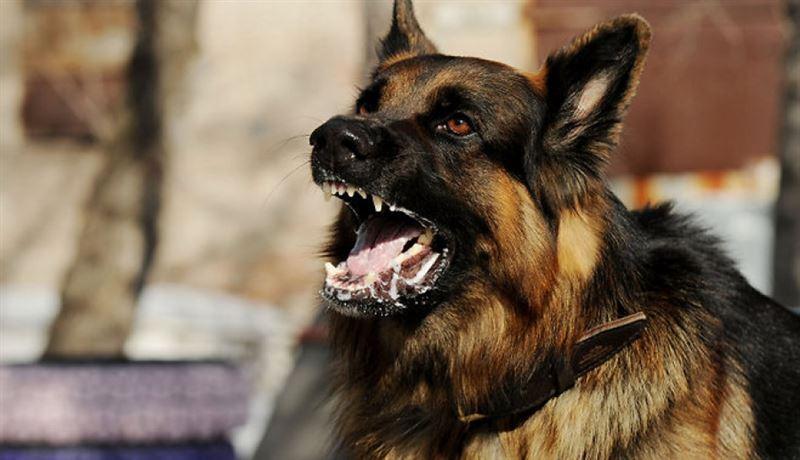 Собака загрызла 8-летнего ребенка в Алматинской области