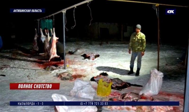 Барымтачи успели зарезать 23 овцы из угнанной отары
