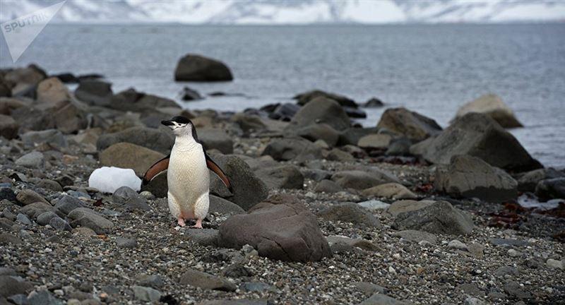 Антарктидада жылына 126 мың доллар жалақы төлейтін жұмыс орны ашылды