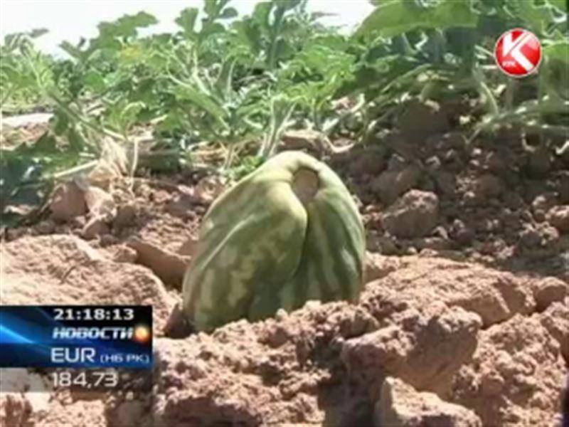 Фермеры Жамбылской области грозят судом чиновникам, которых сельчане обвиняют в миллионных убытках