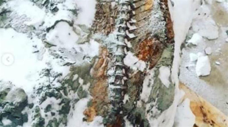 Қостанай облысында 20 млн жыл бұрынғы балық табылды