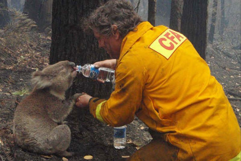 В Австралии более миллиарда животных погибло во время лесных пожаров
