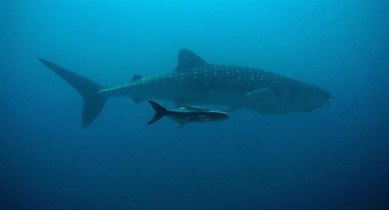 Достарымен демалып жүрген футболшыны акула жеп қойды