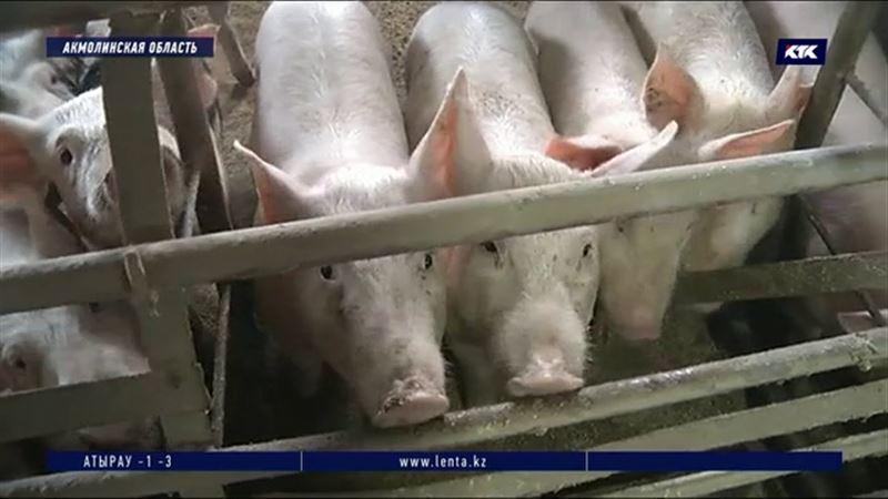 Работники свинофермы несколько лет добиваются человеческого отношения