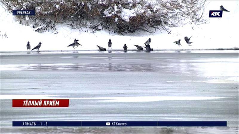 Тонкий лед: крещенское ныряние в прорубь, возможно, придется заменить обливаниями
