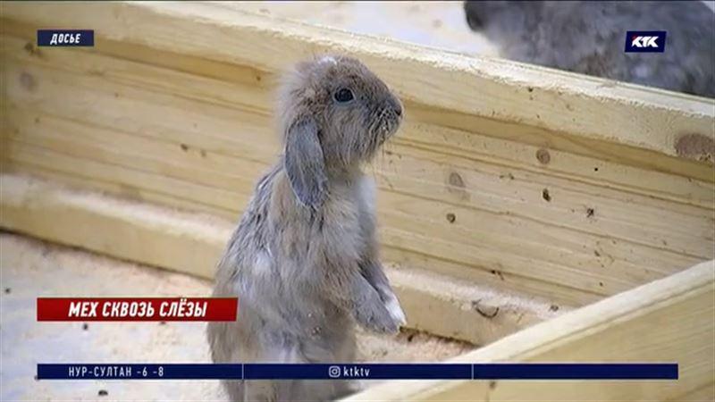 «Не должно быть контактных зоопарков» – зоозащитники Алматы