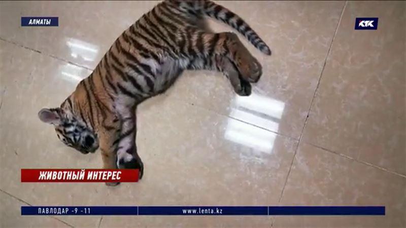 Спасение 28 животных: контактный зоопарк в торговом центре закроют