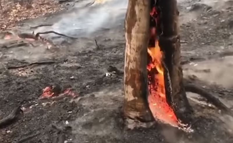В Австралии, где бушуют пожары, пошли дожди
