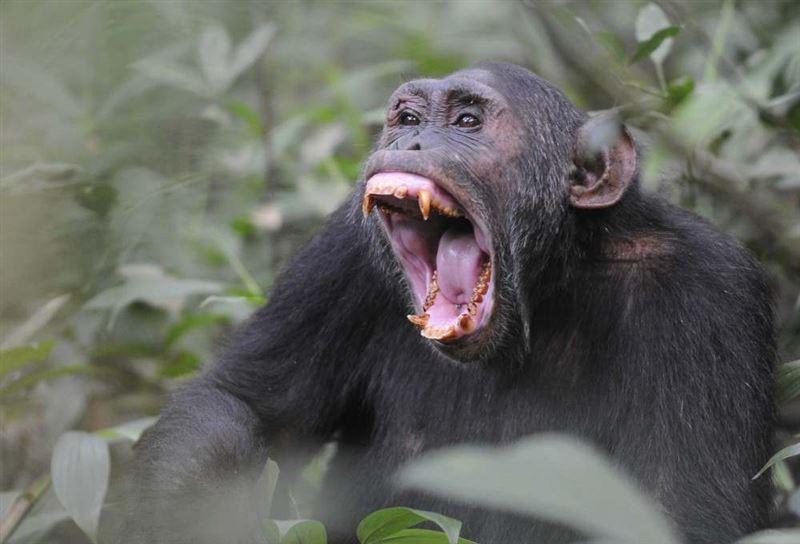 Ученые выяснили, когда и почему животные начали издавать звуки