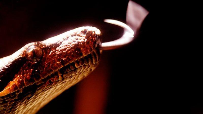 Источником нового коронавируса в Китае могли стать змеи