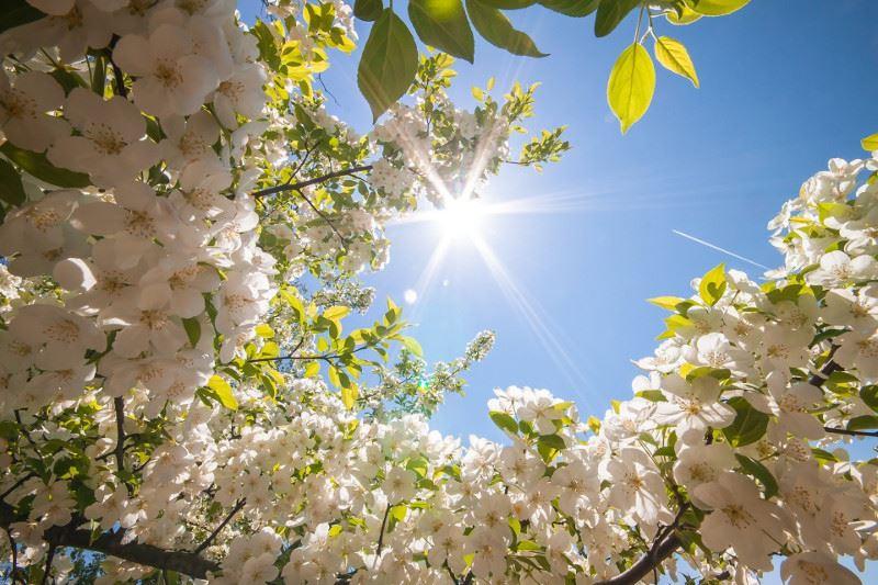 Алдағы күндері ауа райы 15 градусқа дейін жылынады