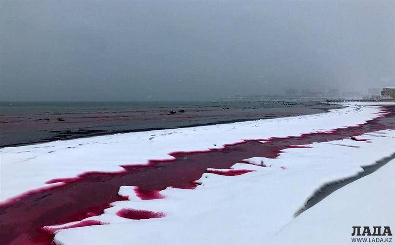 В красный цвет окрасилась вода у берега Каспийского моря в Актау