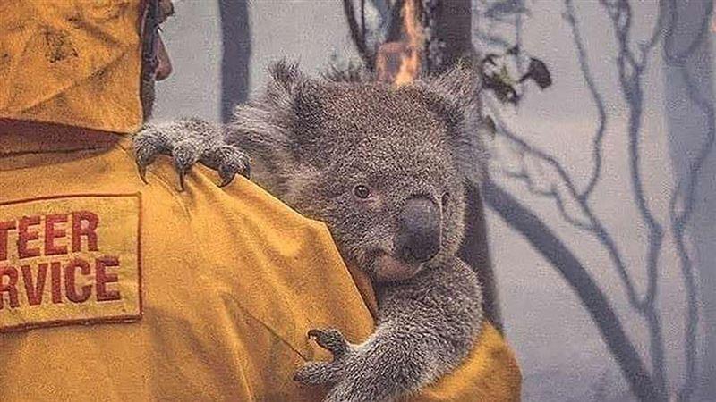 Пожары в Австралии: 113 видов животных нуждаются в экстренной помощи