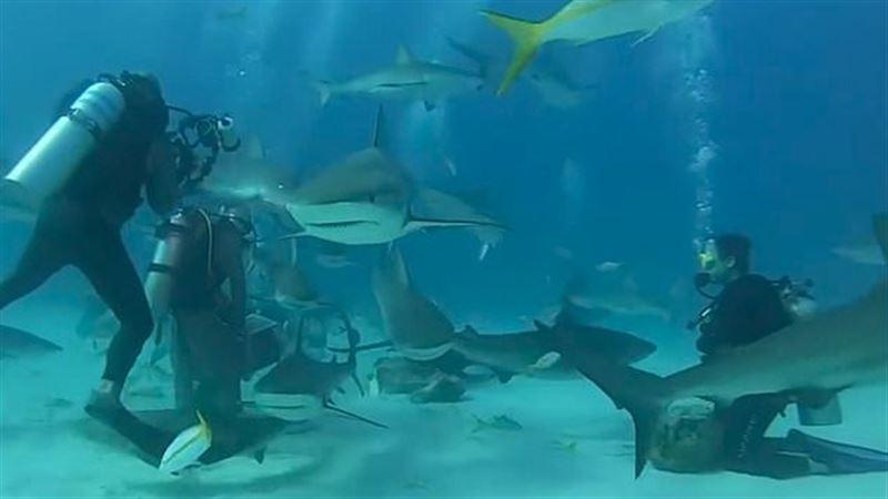 Видео: дайверы в окружении 50 акул раздают им еду