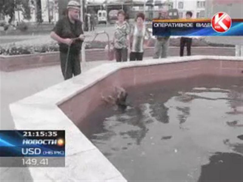 В Павлодаре cпасали бродячую собаку, нырнувшую в фонтан