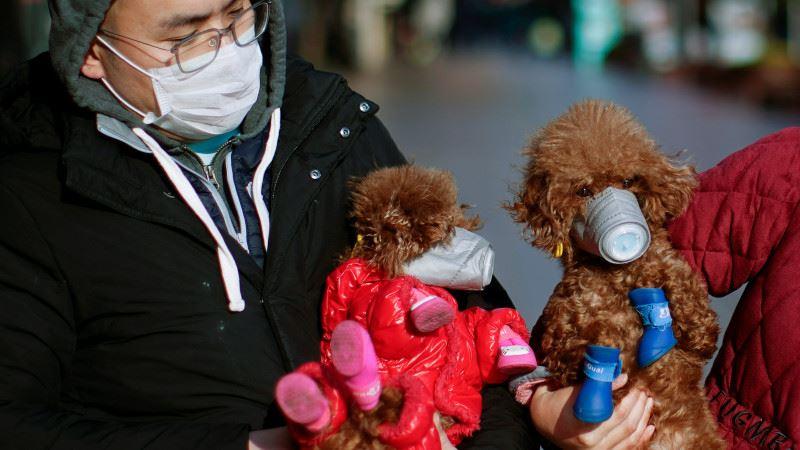 В Гонконге коронавирусом заразилась собака