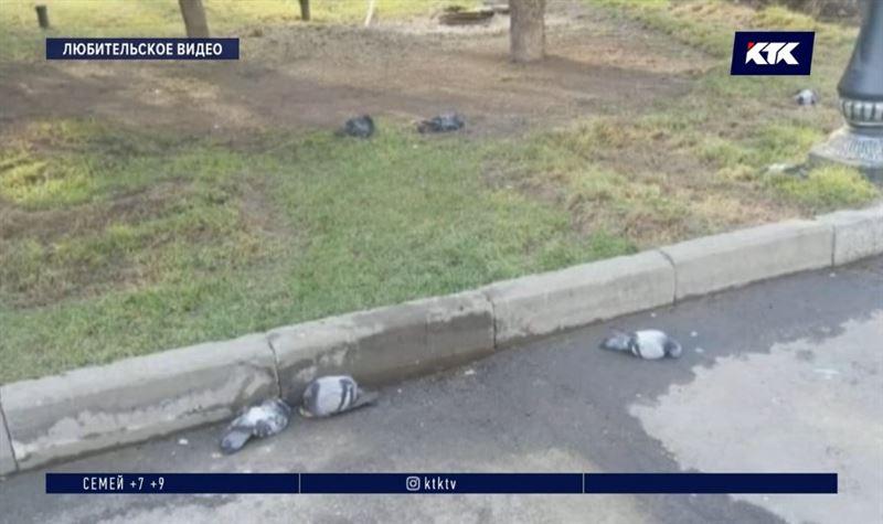 Озвучена версия о массовой гибели голубей в алматинском парке
