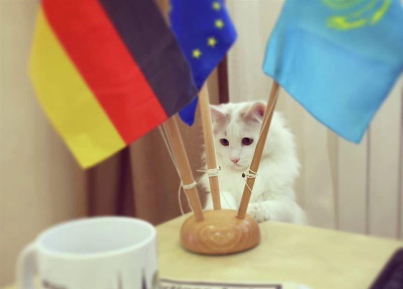 Советником посольства Германии в Казахстане назначен кот