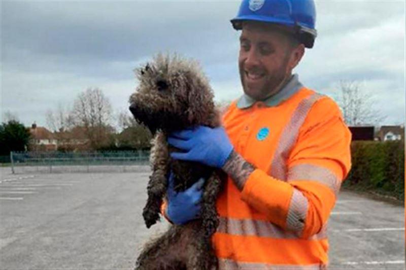 Погнавшийся за крысой пес застрял в канализационной трубе
