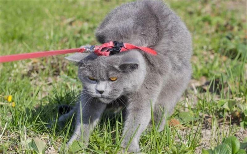 Мужчина выгуливал кошку на поводке во Франции